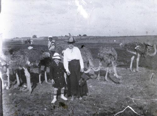 Vue d'ensemble de l'autrucherie (Mekhnès)