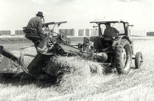 Genossenschaftsbauern im Sommer bei der Feldarbeit (im Hintergrund Hoyerswerda-Neustadt), 1961. Sorbisches Kulturarchiv Bautzen (Rechte vorbehalten)