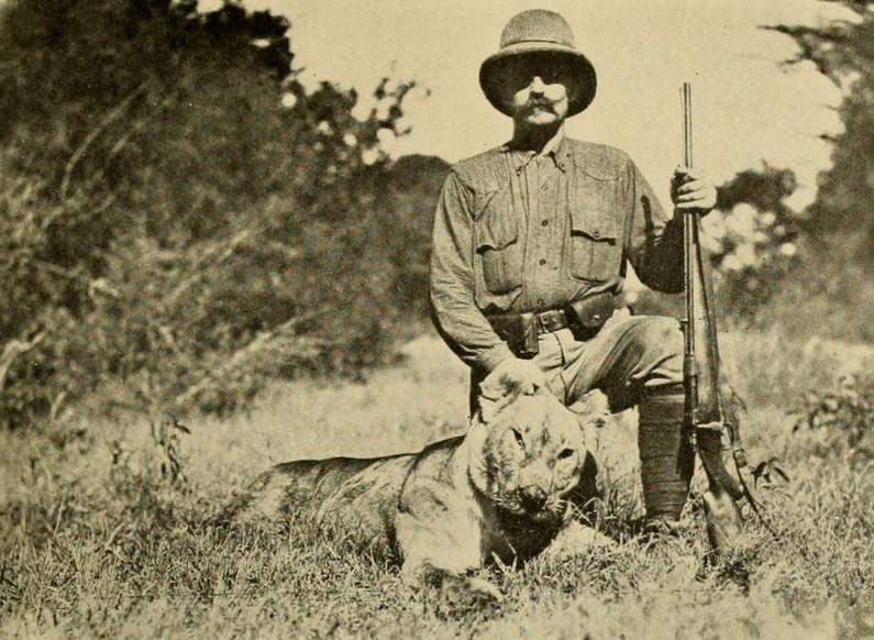 Lioness, shot in the Sotik Plains of Kenya, 1909. The specimen in question nearly killed the author, Tjader. Auteur : Richard Tjader. Tiré de : Richard Tjader, The big game of Africa, New York and London, D. Appleton and company, 1910. Voir : https://archive.org/details/biggameofafrica00tjad ; https://commons.wikimedia.org/wiki/File:The_Big_Game_of_Africa_(1910)_-_Lioness_Sotik_Plains_1909.png