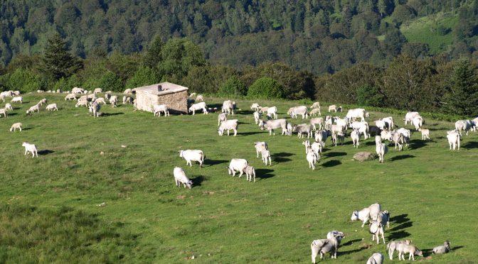La Fédération pastorale de l'Ariège, une structure pilote en matière d'AFP