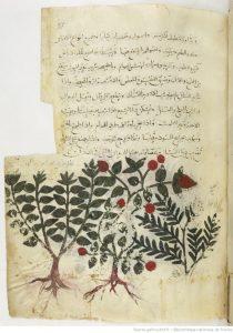 mm-arabe2