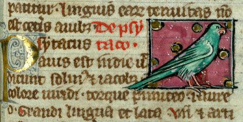 Détail d'un perroquet, Valenciennes, Bibliothèque municipale, ms. 320, f°108 r°.