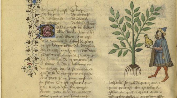 Peindre l'arbre au Moyen Âge. Les herbiers enluminés de la Bibliothèque nationale de France.
