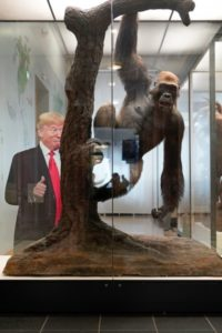 Auf dem Bild sieht man einen Gorilla in einem Glaskasten, der sich mit einem Arm von einem Baum hängen lässt. Dahinter ist eine Fotografie des US-amerikanische Präsident Donald Trump zu erkennen, der seinen Daumenfinger spreizt.