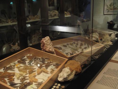 Tropenmuseum - história natural