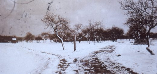Weg auf dem Oberfeld, 1920, StadtA DA Best. 53 Nr. 294