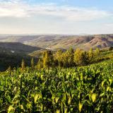 Rwanda Green Fund Investment, ARCOS Network, Rwanda, November 20, 2017 | © Courtesy of Rwanda Green Fund/Flickr.