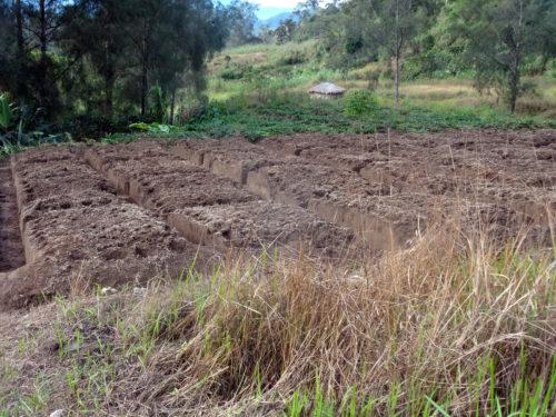 Preparing garden in Manim village to plant taro and sweet potatoes.