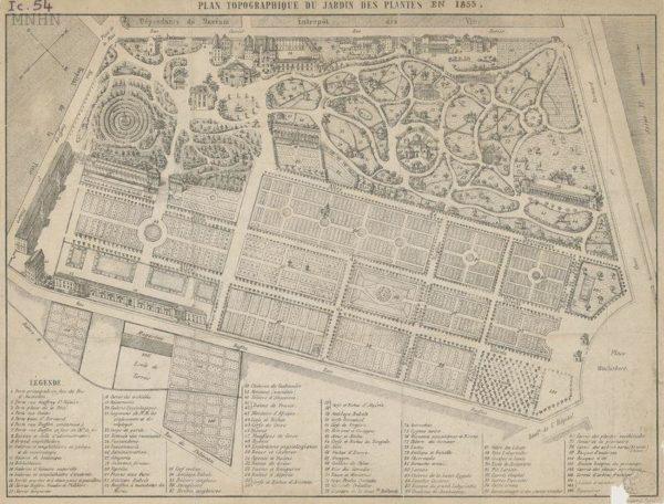 L'ethnobotanique au Jardin des plantes #1 : Le carré Lamarck dit des plantes-ressources