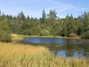 Swamp_lake_Belarus