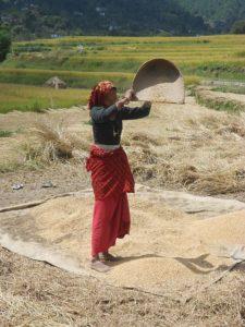 Rice winnowing, Uttarakhand, India