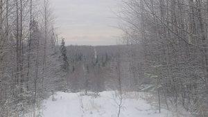 Arkhangelsk, Oblast