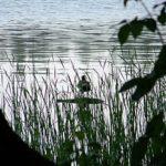 Lac, Drawienski Park