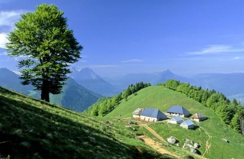 Bellecombe-en-Bauges (Savoie). Chalets d'alpage du Sollier (1 450 m), vue d'ensemble (Gilles Lansard © Parc naturel régional du Massif des Bauges, 2006)