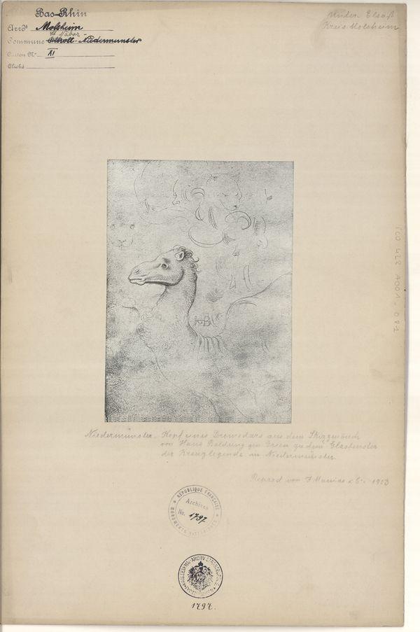 Tête de chameau. Photographie de J. Manias, 1903, reproduisant une esquisse de Hans Baldung Grien datant de 1512, qui servit probablement de projet à la verrière de la Légende de la Croix.