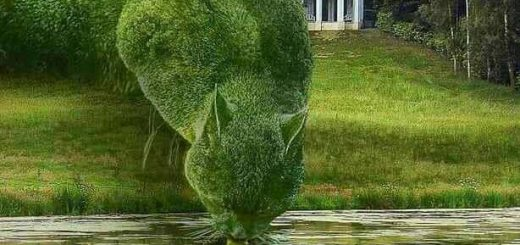 Topiary cat Richard Saunders
