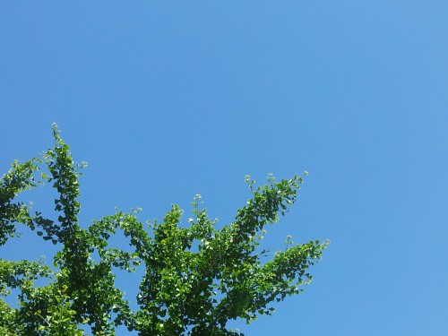 Le jeu vert-bleu du ciel de printemps. Photo E. Azofra