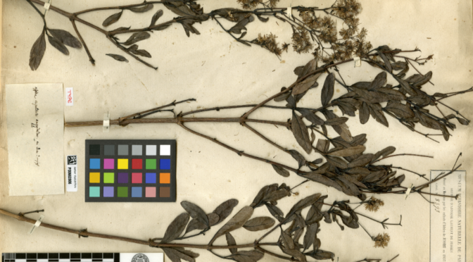 18 JUIN 2019  séminaire par Marc Jeanson: L'Herbier national,  collections naturalistes, entre taxonomie et mondialisation des flores