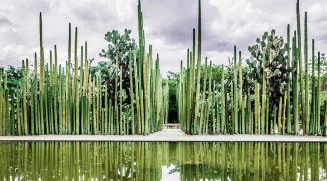 Le jardin  Ethno-Botanique d'OAXACA