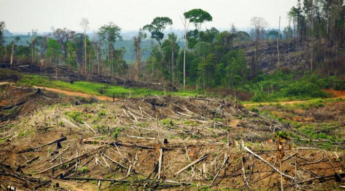 Mouvement Mondial pour lES Forêts tropicales