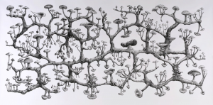 Richard Giblett, Mycelium Rhizome, 2009 Pencil on paper, 120 x 240 cm Source : http://aymed.files.wordpress.com/2011/12/richard-giblett-mycelium-rhizome.jpg