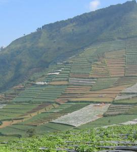 Photo R De Koninck - sur le plateau de Dieng, à Java central, juillet 2009