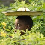 Un nouvel appel de [VertigO] : Approches écosystémiques de la santé