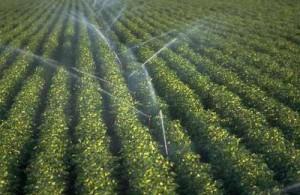 irrigation Babnet.net