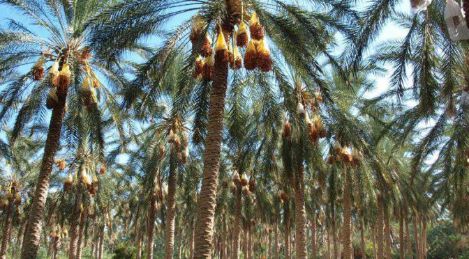 La valorisation des productions locales : vers un système alimentaire territorialisé dans le sud tunisien