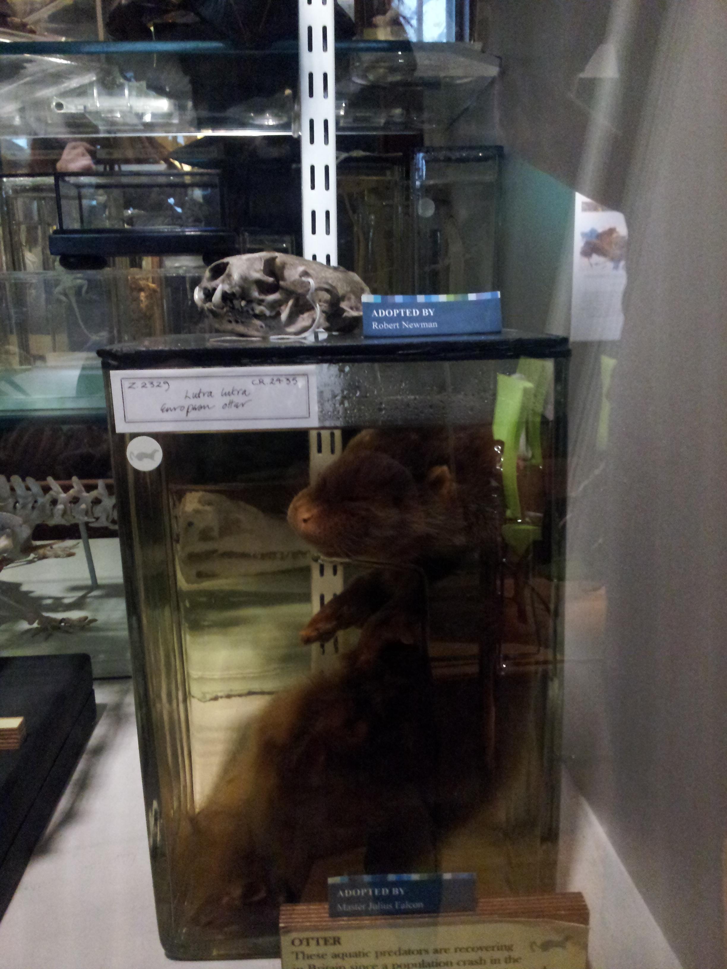 Specimen in Grant museum, UCL