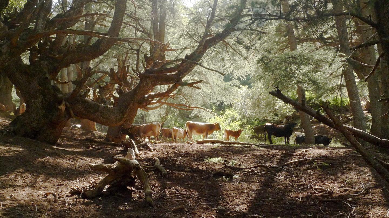 Parc national du Djurdjura, mai 2012 ©Malika Rahal