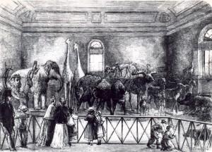 Le cabinet zoologique de Varsovie (moitié du XIXe siècle)