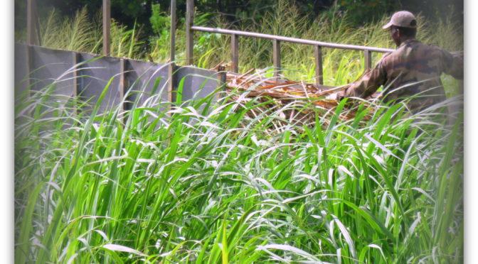 Mundus Alter 21: Liberdade e limitação na construção de engenhos de cana de açúcar: Petições na cidade de Salvador na década de 1660. Por Luis Henrique Sousa dos Santos