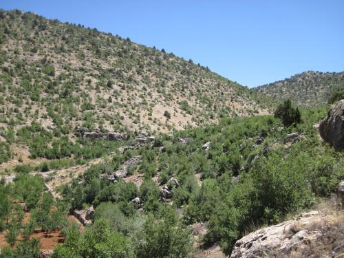 Fig. 1 : le ravin du Ouadi ech-Charbine.