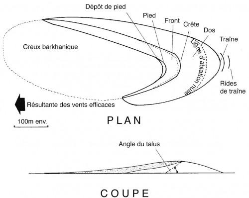Figure 2 : Plan et coupe d'une barkhane (d'après Oulerhi, 1992)