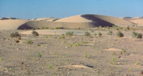 Figure 9 : Une barkhane assez haute est rattrapée sur son aile dextre par une plus petite barkhane qui commence à se fondre en elle. Région de Tarfaya (Maroc). Devant les barkhanes, on voit une dune en bouclier, et encore devant des nebkhas, accumulations de sable autour d'un végétal formant une flèche sous le vent du dernier vent efficace (photo Yann Callot).