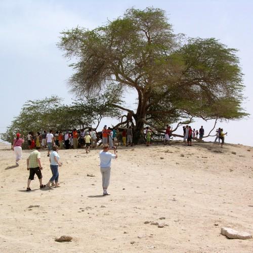 Figure 5. L'Arbre de Vie, attraction touristique majeure de Bahreïn (cliché: S. Aradi)