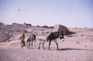 Acheminement des réserves d'eau à dos d'âne depuis le Nil jusqu'à la maison de fouille