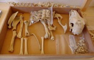 Fig. 8 : les tiroirs une fois classés (C. Giguet)