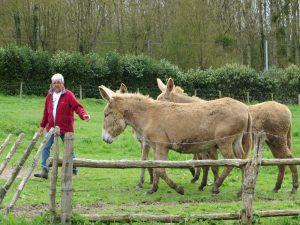 Le charmeur d'ânes (© M. Spruyt)