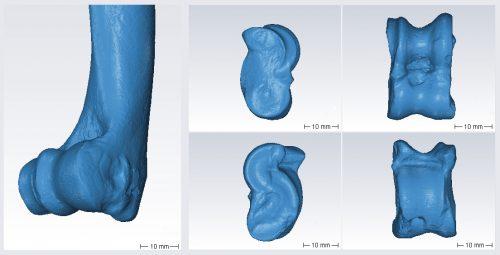 Fig. 1 : Modèles 3D obtenus à partir du scanner Artec spider : extrémité distale d'un humérus droit de chèvre (à gauche) et astragale gauche de mouton (à droite).
