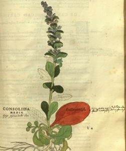 Fuchs, 16gh-century herbal, hand colored