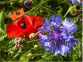 sylvie flowers 1