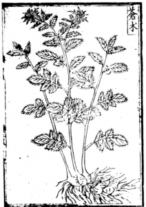 Atractylodes chinensis (DC.) 蒼朮, from the Jiuhuang bencao 救荒本草 (Materia Medica for Surviving Famine) 1.101a
