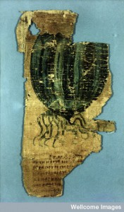 L0015764 Johnson Papyrus, fragment of an illustrated herbal.