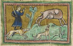 A medieval miniature representing a beaver biting off his testes to avoid been killed by a hunter for its castoreum. Source: http://britishlibrary.typepad.co.uk/digitisedmanuscripts/2012/11/beavers-on-the-run.html