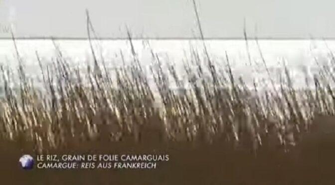 Les Indochinois et le riz en Camargue [Arte]