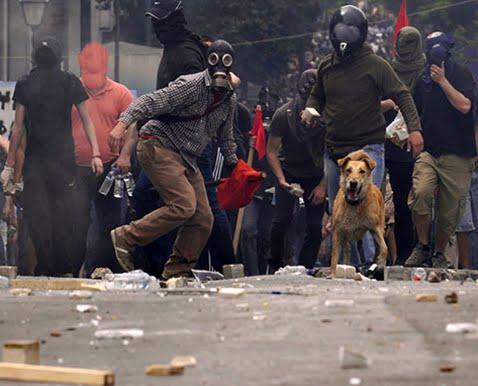 Chien grec dans une manifestation